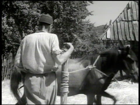 barn, farmer w/ horse. man w/ horse around pole, trampling wheat. workers binding wheat. loading bound wheat onto wagons, stacking. women stacking... - 1948 stock videos & royalty-free footage