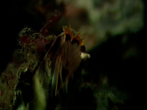 barnacle uses feathery feeding appendage to capture drifting plankton. - barnacle stock videos & royalty-free footage