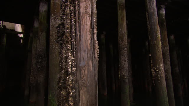 'Barnacled pier pillars filmed from boat, dark and dramatic,  Ketchikan, Ketchikan Borough, Alaska'
