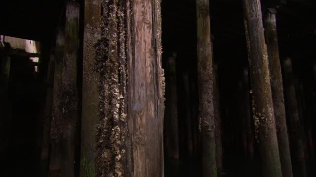 """Barnacled pier pillars filmed from boat, dark and dramatic,  Ketchikan, Ketchikan Borough, Alaska"""