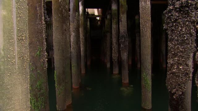 """stockvideo's en b-roll-footage met """"barnacled pier pillars filmed from boat, dark and dramatic,  ketchikan, ketchikan borough, alaska"""" - rankpootkreeft"""