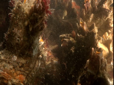 barnacles feed in ocean. - anacortes stock videos & royalty-free footage