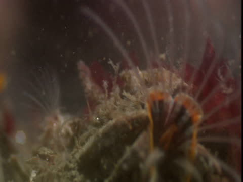 barnacles feed using feathery appendages. - seepocke stock-videos und b-roll-filmmaterial