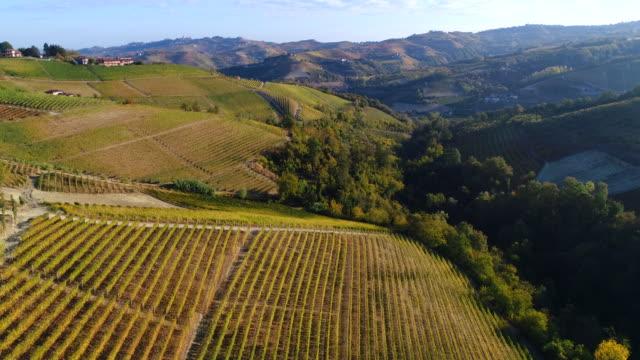 barolo vineyards in autumn, piedmont, italy - ワイン点の映像素材/bロール