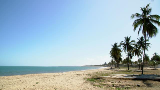 vídeos de stock, filmes e b-roll de praia de barra de sirinhaem - coco