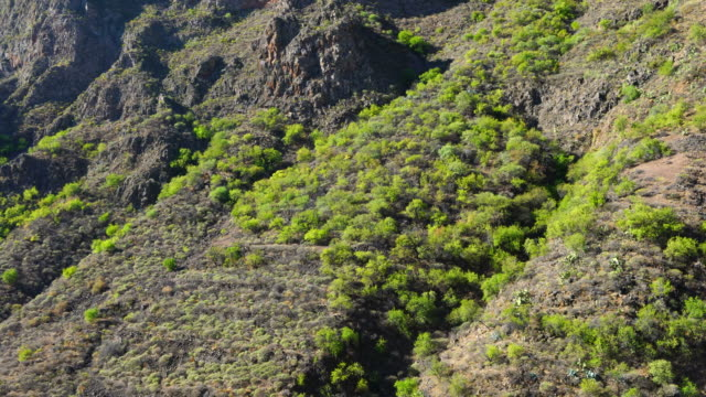 Barranco de Guayadeque, Gran Canaria Island, Canary Islands, Spain, Europe