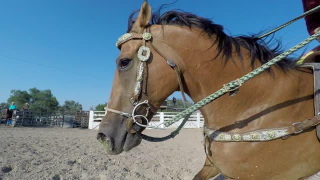 barrel racing cowgirls auf pferden bei einem rodeo - subjektive kamera blickwinkel aufnahme stock-videos und b-roll-filmmaterial