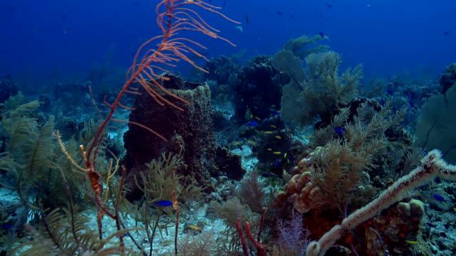 Barrel sponge, fan coral, Caribbean reef scene