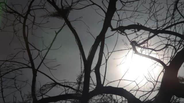 Barren Branches