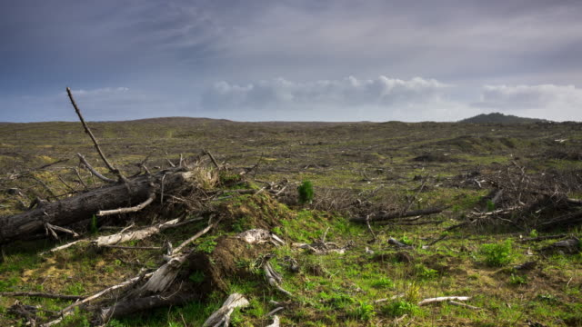 barren deforested landscape - time lapse - forestry industry stock videos & royalty-free footage