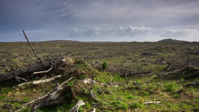 vídeos y material grabado en eventos de stock de barren deforestado paisaje - lapso de tiempo - industria forestal