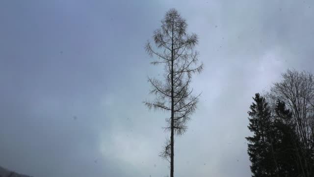 barren dry tree against grey sky in winter forest - naturwald stock-videos und b-roll-filmmaterial