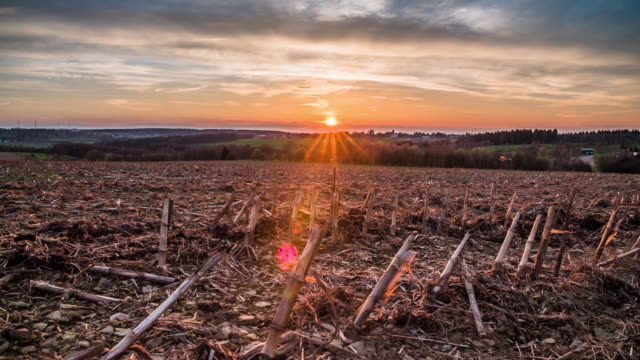 barren field at sunset - crane shot - terra brulla video stock e b–roll