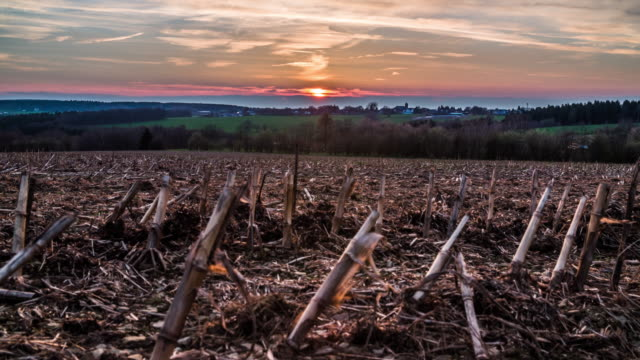 CRANE: Barren field at sunset
