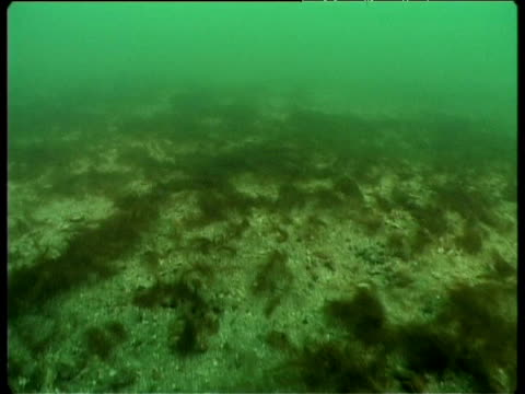 barren seabed as a result of dredgers from the fishing industry, conakry, guinea coastal areas, west africa - thick stock videos & royalty-free footage