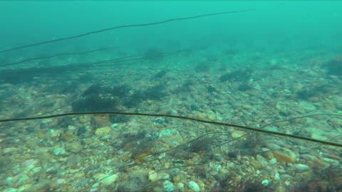 vídeos y material grabado en eventos de stock de barren seafloor in sussex - kelp