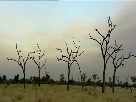 barren trees in dry grassy area with dark bare tree branches against grey sky - bare tree stock-videos und b-roll-filmmaterial