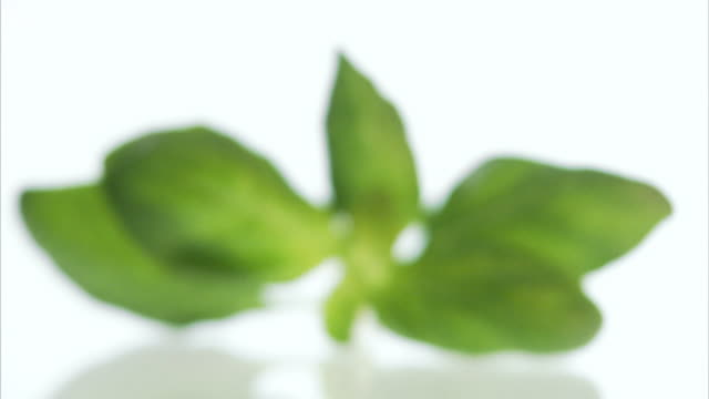 basil sweden. - mint leaf culinary stock videos and b-roll footage