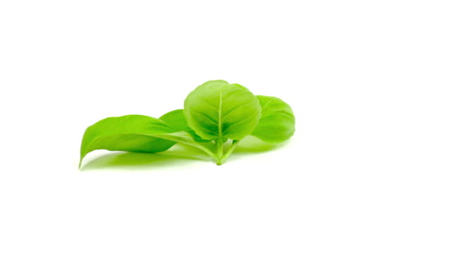 basil - basil stock videos & royalty-free footage