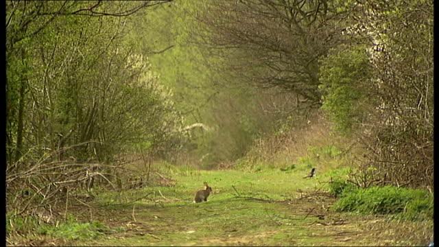 vídeos y material grabado en eventos de stock de basildon council plans to make landfill site into country park; good shots of rubbish / rabbits on forest path / empty lifebelt holder next to lake /... - bare tree