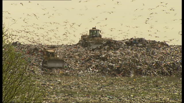 Basildon council plans to make landfill site into country park Lake with birds flying and on surface with trees and reeds in background / Concrete...