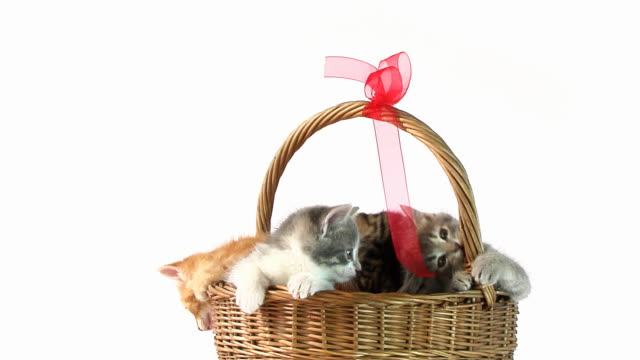 Basket Cats