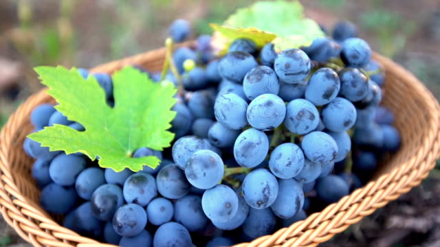 basket full of grapes - grape stock videos & royalty-free footage