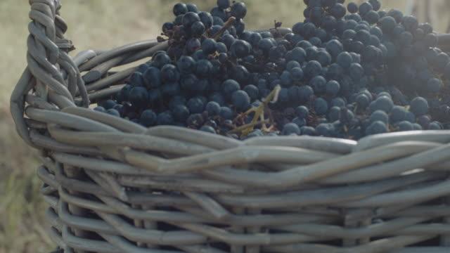 vídeos y material grabado en eventos de stock de cesta llena de uvas - uva cabernet sauvignon