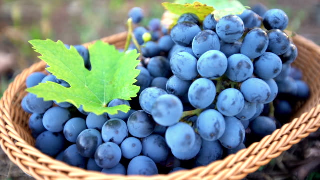 basket full of grapes - red grape stock videos & royalty-free footage