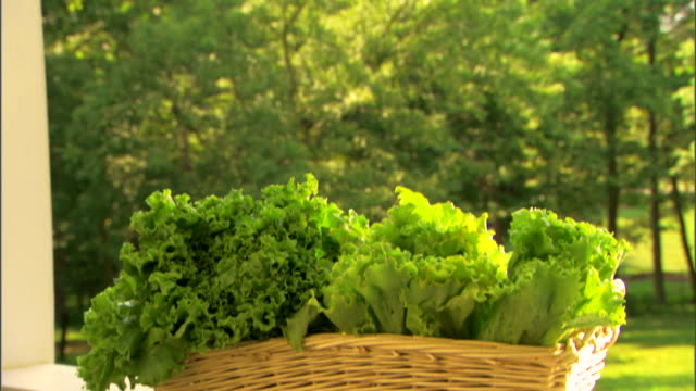 basket of fresh organic lettuce - see other clips from this shoot 1425 stock videos and b-roll footage