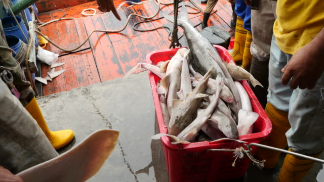 basket of sharks and rays hauled up from fishing boat to be sold at market - fish market stock videos and b-roll footage