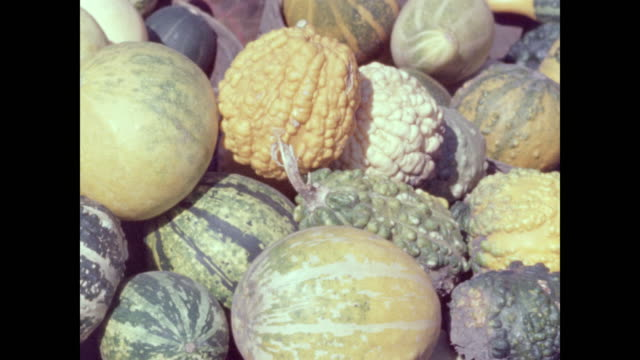 basket of squashes and gourds - zucca legenaria video stock e b–roll
