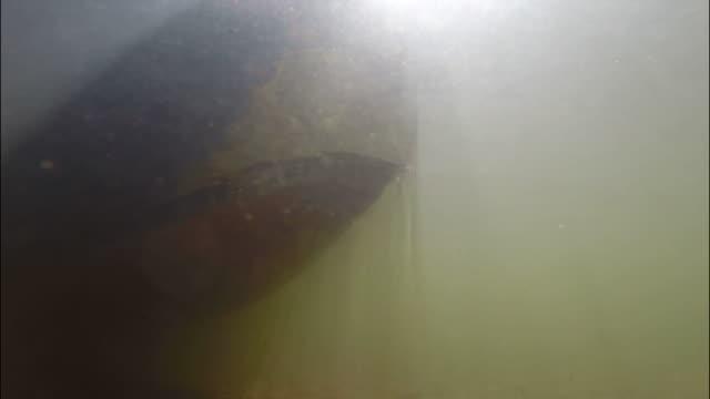 bassin d'arcachon - leyre river underwater view - kanu stock-videos und b-roll-filmmaterial
