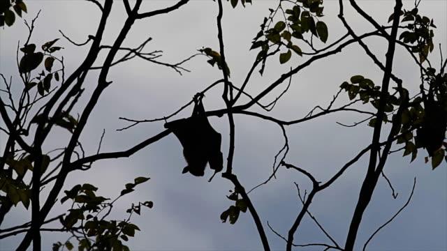 Bat-Animal.