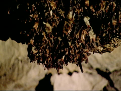 Bat colony in cave, Andalucia, Spain