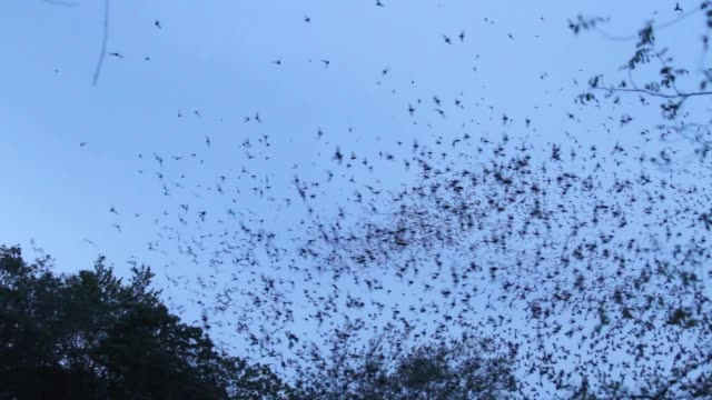 bat colony in cave - england stock videos & royalty-free footage