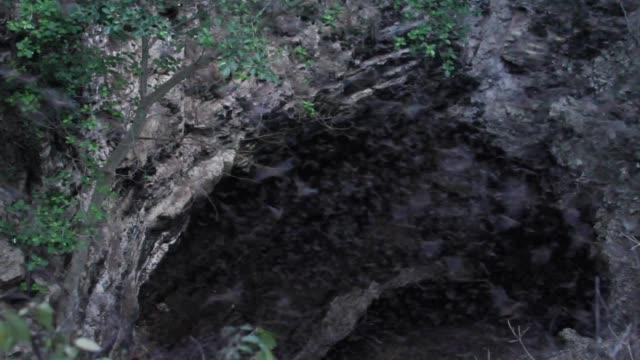 fledermauskolonie in der höhle - colony stock-videos und b-roll-filmmaterial