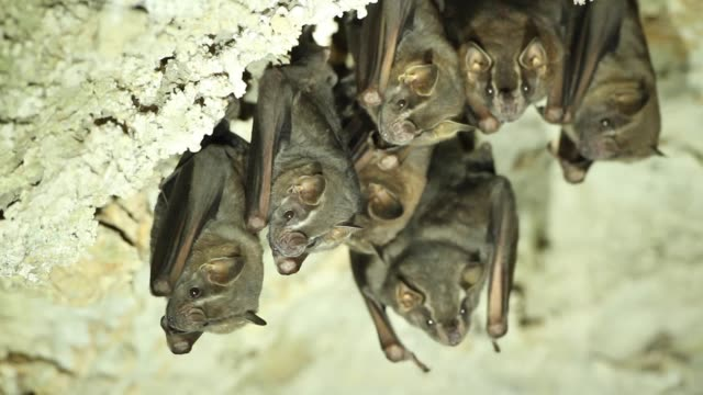 bat colony in cave - north america stock videos & royalty-free footage