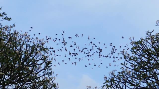 bat swarm flying on sky. - animal migration stock videos & royalty-free footage