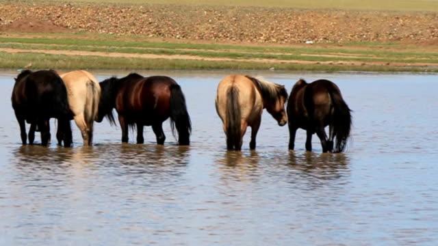 Lotto di cavalli di Nizza mongolo