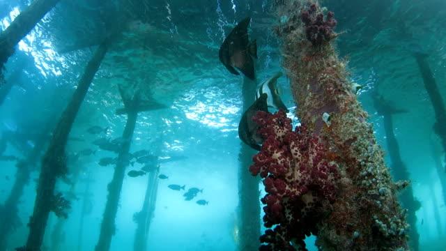 vídeos de stock, filmes e b-roll de peixe-morcego cais escondido sob um pequeno - deep sea diving