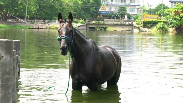 Bad paardenrace