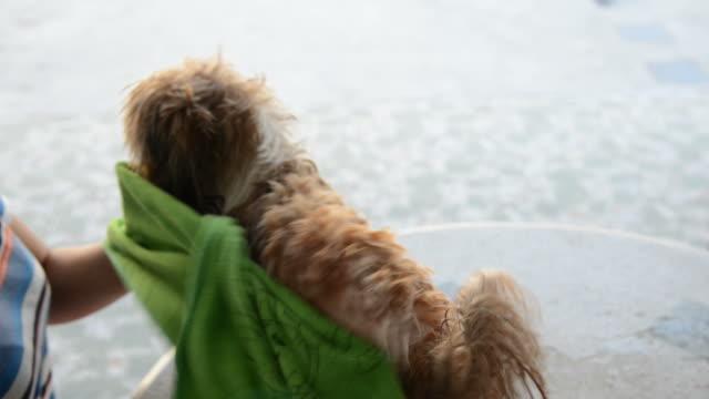 baden hunde - hygiene stock-videos und b-roll-filmmaterial