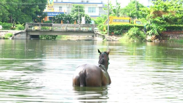 Zwemmen paardenrace