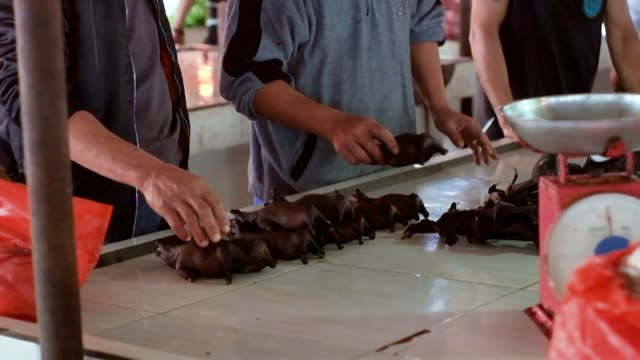 bats and snakes are still being sold at the tomohon extreme meat market on indonesia's sulawesi island despite a government request to take them off... - request stock videos & royalty-free footage