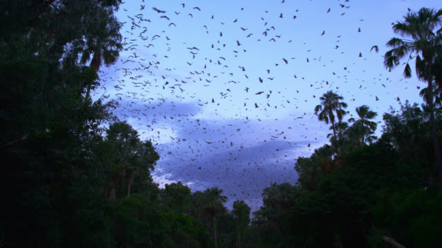 bats fly near trees, australia. - rainforest stock videos & royalty-free footage