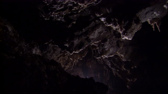 bats fly through cueva de villa luz, mexico. available in hd. - cave stock videos & royalty-free footage