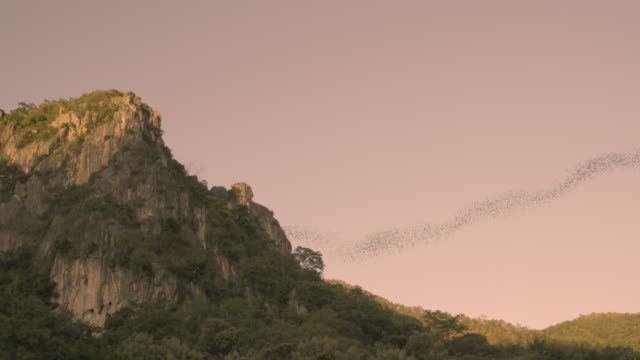 Bats flying from a cave at sunset
