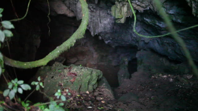 Bats flying wild in a cave, wide shot