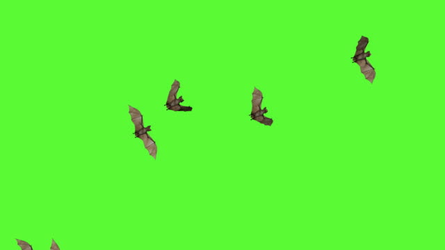vídeos de stock e filmes b-roll de 3d bats green screen - asa de animal